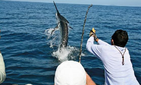 Big game fishing comondu mexico
